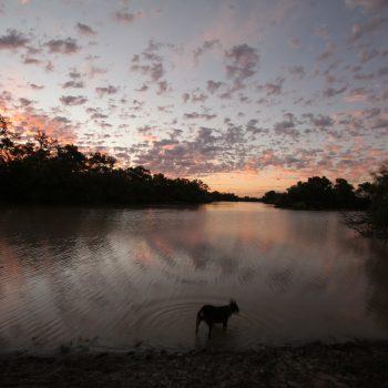 Warrego River & Dog