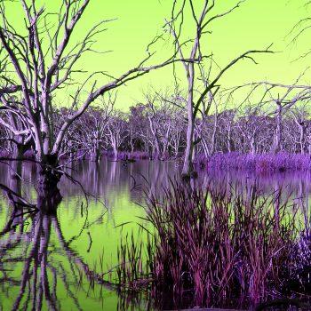Gum Swamp